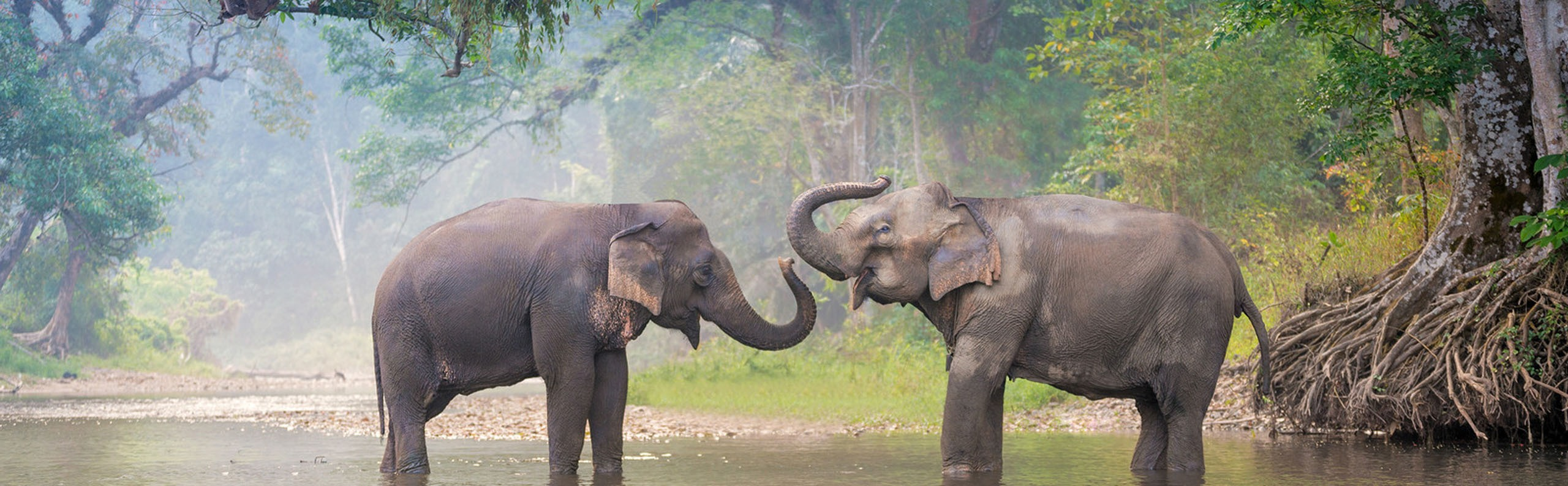 The Best 3 Ethical Elephant Sanctuaries in Chiang Mai