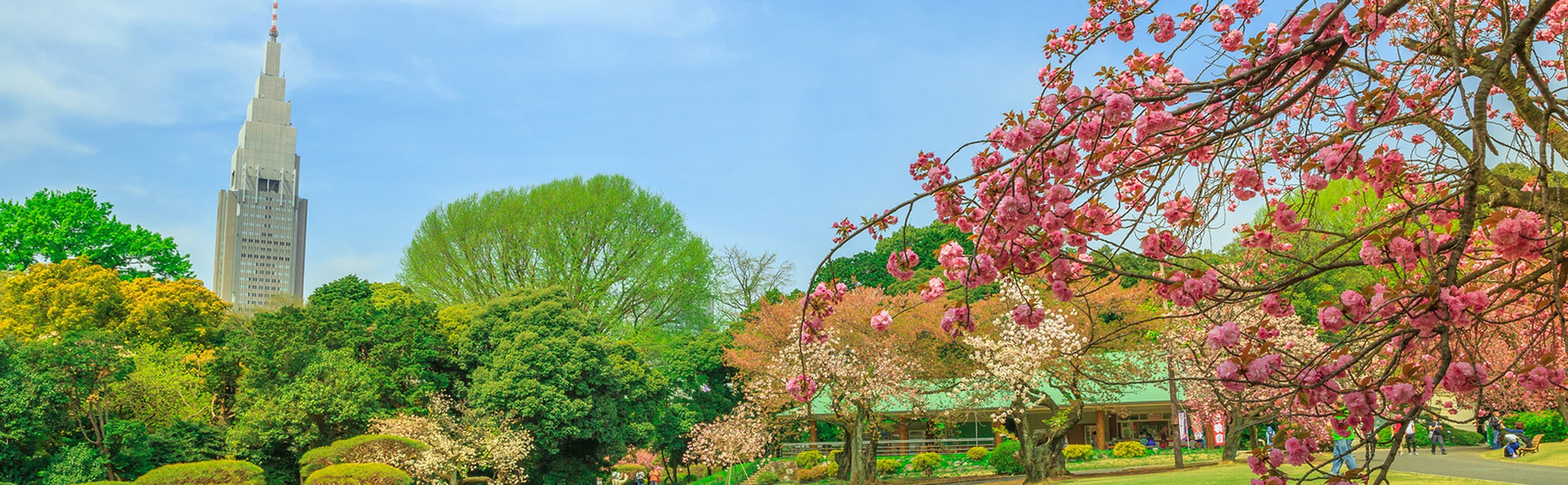 Cherry Blossom in Tokyo - Best Places to Enjoy the View