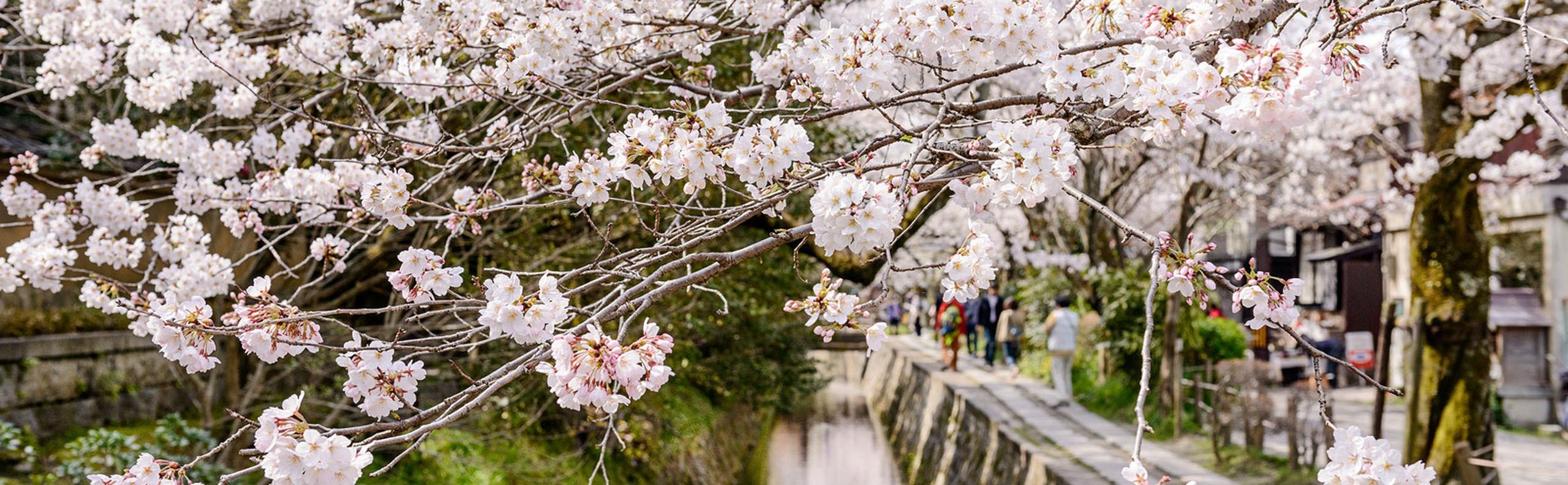 Philosopher's Path, Silver Pavilion, and Nanzenji Guide