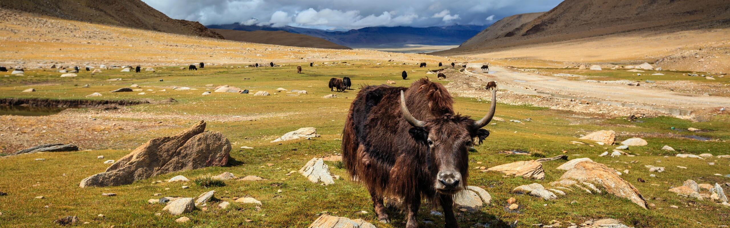 A Complete Guide to Pangong Tso Lake, Ladakh