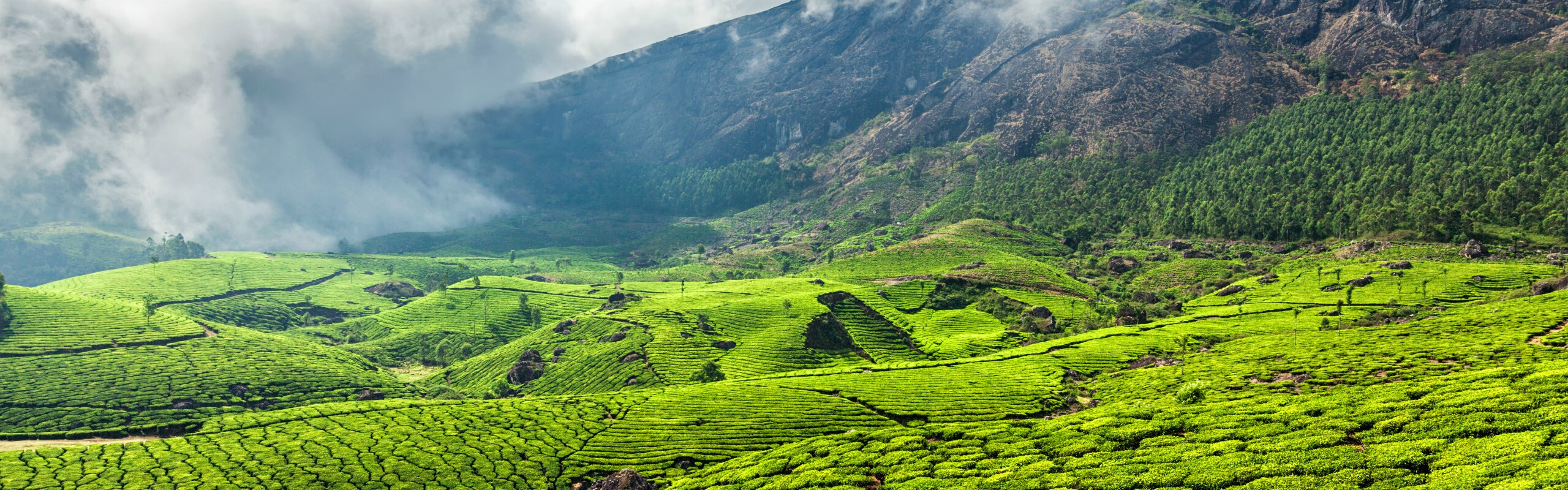 Top 12 Places to Visit in Kerala